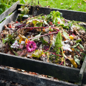 compost crate filled with food and waste